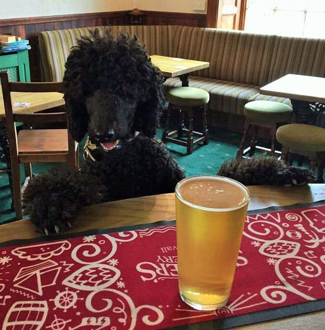 Did you know we're dog friendly? This is one of are regulars at the Inn... #angarrackinn #dogfriendly #cornwall