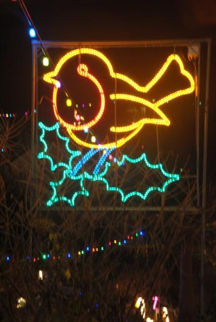 Christmas Robin 2013